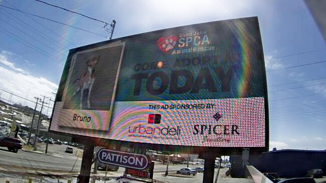 SPCA ad on Rothesay Ave.